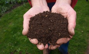 Le compost en appartement